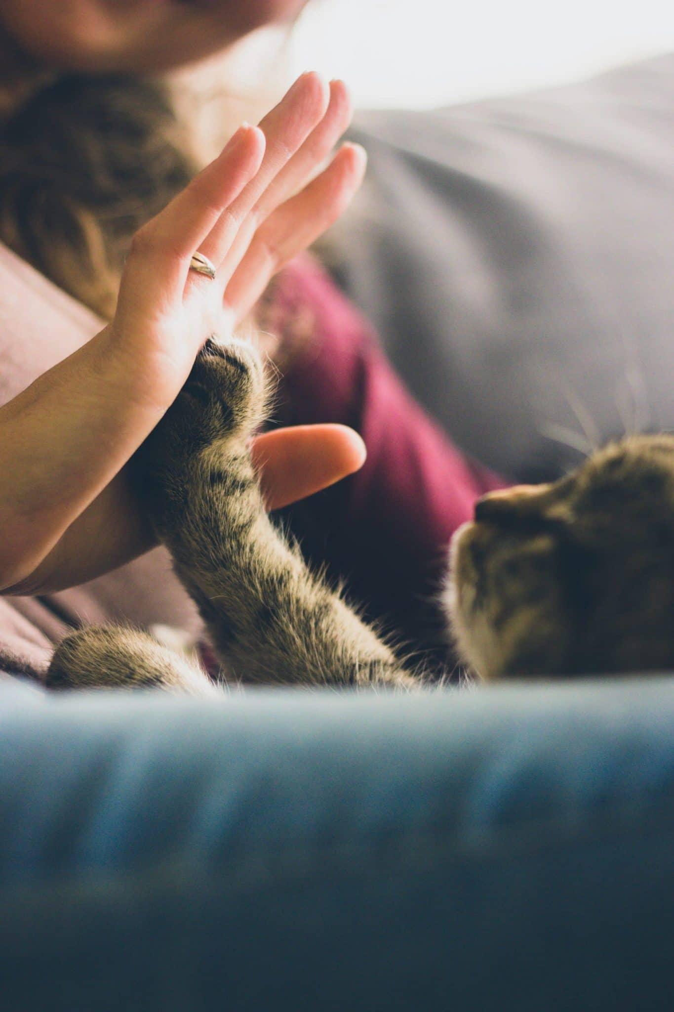 mina sève de bouleau pour chats